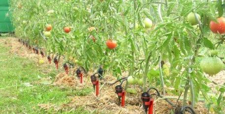 arrosage gravité iriso pour le jardin
