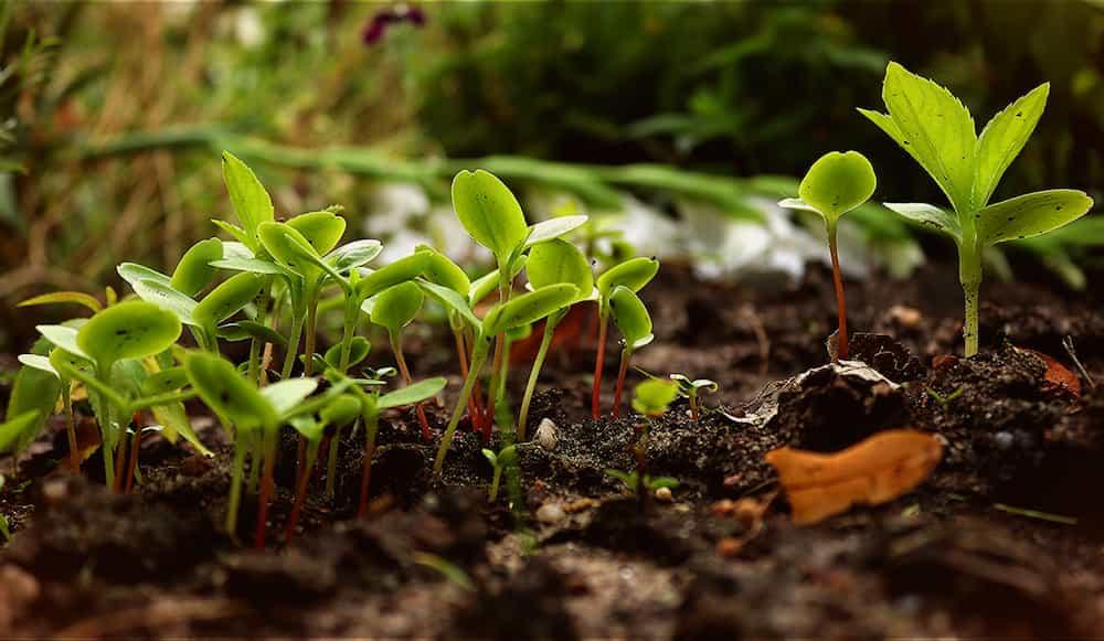 Découvrir-la-permaculture-et-ses-principes-de-base